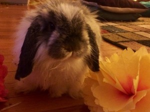 I Give All The Rest, Residue and Remainder of My Estate to My Rabbit, Princess Sophia